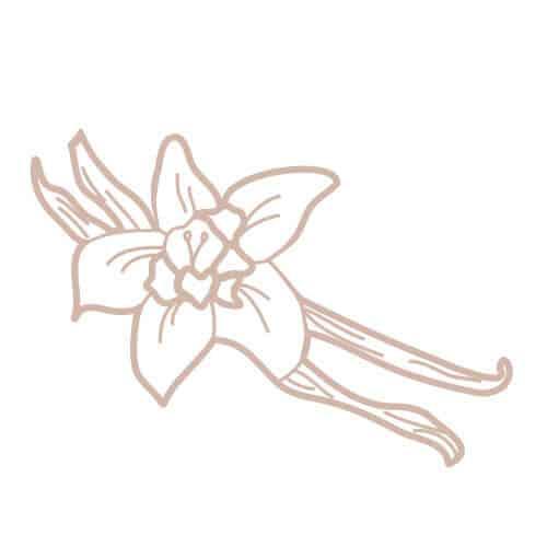 Parfum gourmand aux notes de vanille et cacao
