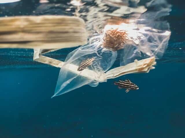 Sac plastique, un fleau pour lenvironnement